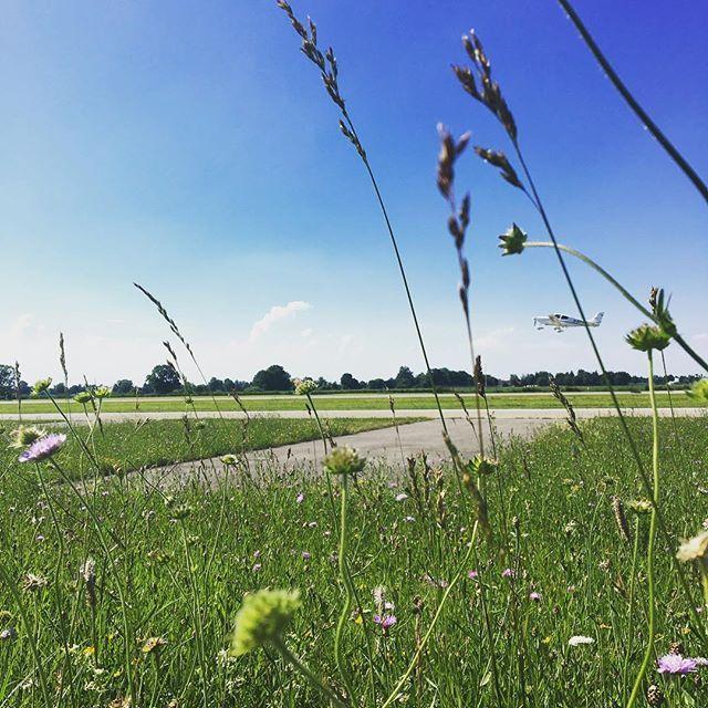 Bienenparadies auf dem Augsburger Flugplatz. Wir starten unser letztes Leg. Uetersen, wir kommen!