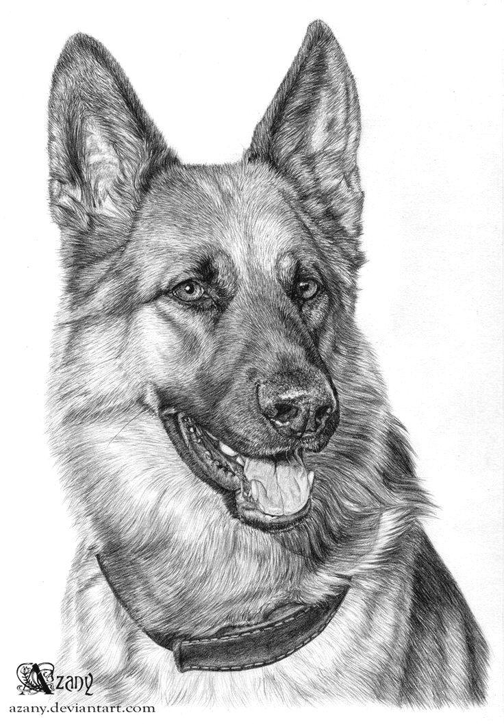 Pin By Nichole W Sanchez On German Shepherd Dog Paintings Animal Drawings Dog Art