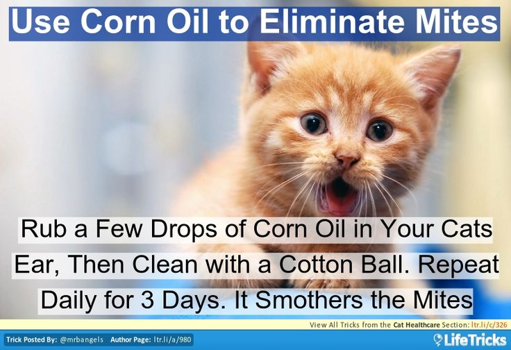 Corn Oil For Ear Mites In Cats