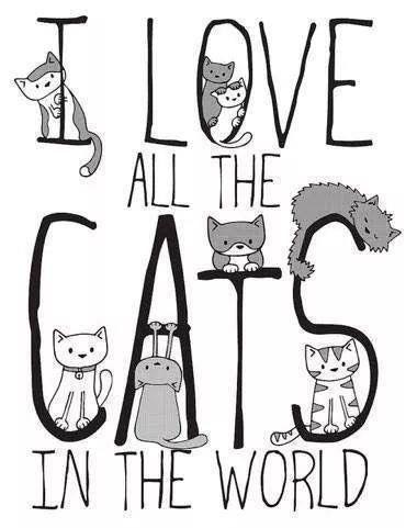 Amo a todos los gatos del mundo.
