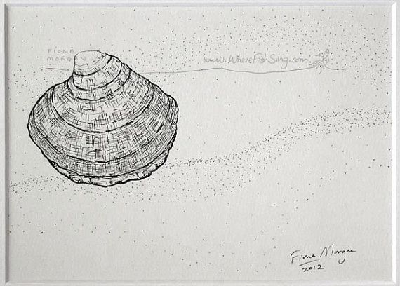 WhereFishSing.com Fiona Morgan, pen drawing 'Meditative Study' #WhereFishSing SEA SHELL Drawing Beach Decor Matted Nature illustration ORIGINAL Botanical Drawing, Black & White, pen & ink, zen, mindfulness