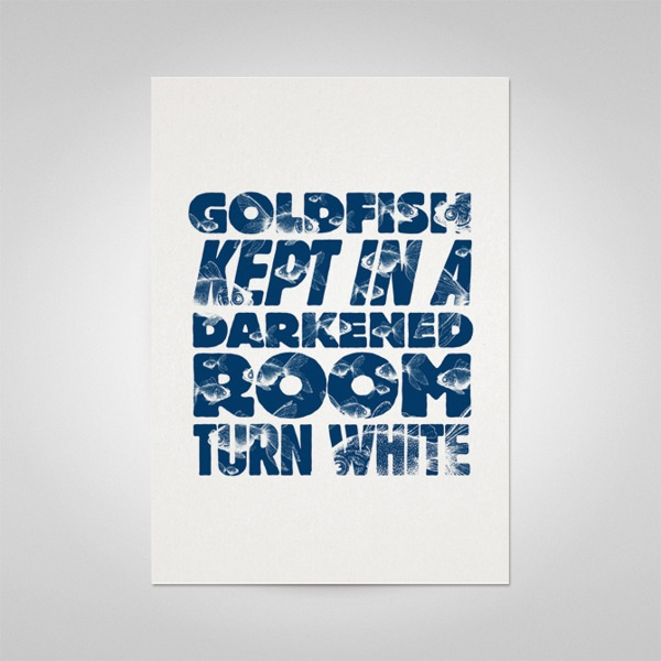 """""""Goldfish kept in a darkened room turn white""""   Bash It Out Posters II by Ello Mate!  www.ellomate.co.uk"""
