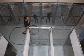 """""""Sean Casey's Animal Rescue Takes on New Heights"""" by Lauren Evans - The famous no-kill shelter of Kensington will soon open a new location in Sunset Park... (My local shelter- we got our cats there and buy our pet food there and they do really good work! --TT)"""