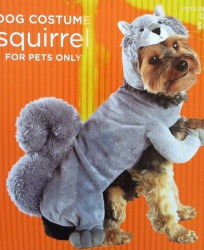 Dog Squirrel Costume Meme