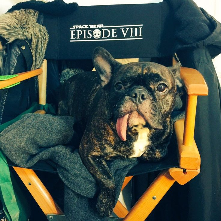 Star Wars Episode VIII. I'm going to say that's Carrie Fisher's dog, not a creature cast member.