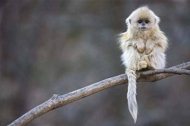 18 djurarter som förmodligen kommer vara utrotade långt innan Du dör.