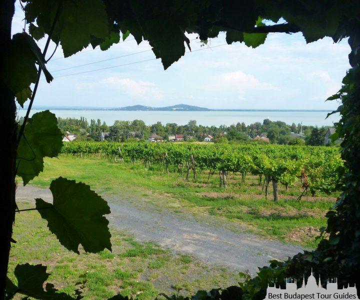 Au lac Balaton, viticulture, gouter de vin en Hongrie: http://bestbudapesttourguides.com/fr/choisir_un_guide-page-3/katalin_zoesomfai-guide-31/