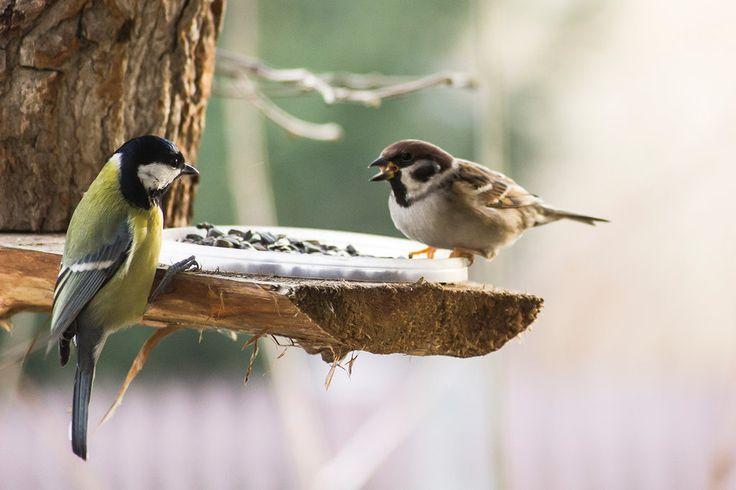 Birdies in the garden on feeder.