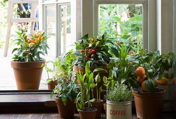 I love lots of Houseplants