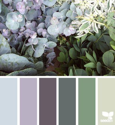 Hydrangea tones
