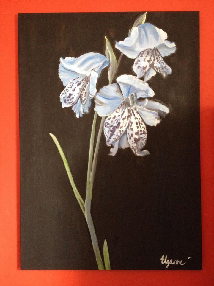 Elzanne Singels- Gladiolus caeruleus (2014)