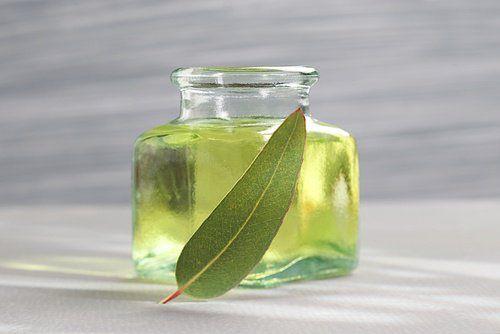 Aceite de eucalipto para evitar mosquitos en casa y jardin