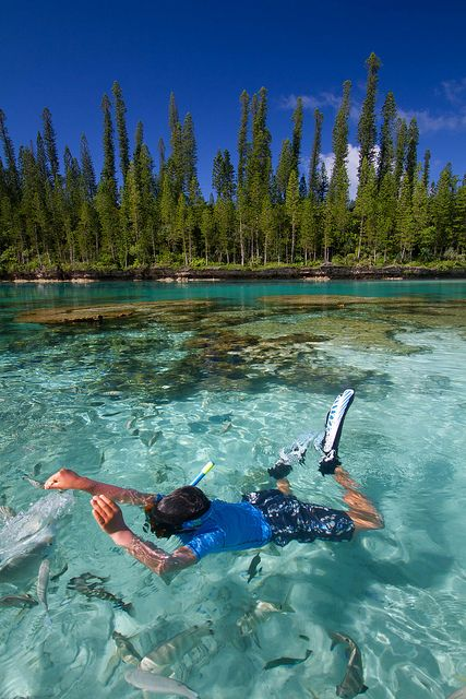 Feeding fish, Isle of Pines, New Caledonia