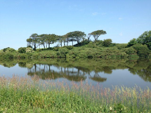 Tamar Lakes