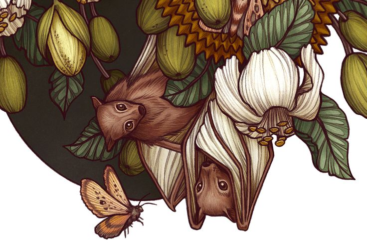 Illustration for Light Grey Art Lab's 'Botanica' show, of nectar bats in a Durian tree.