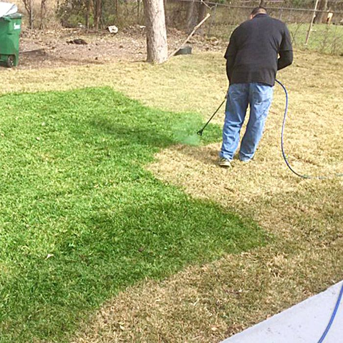 How Lawn Spray Paint Keeps Your Grass Green Grass Painting Lawn