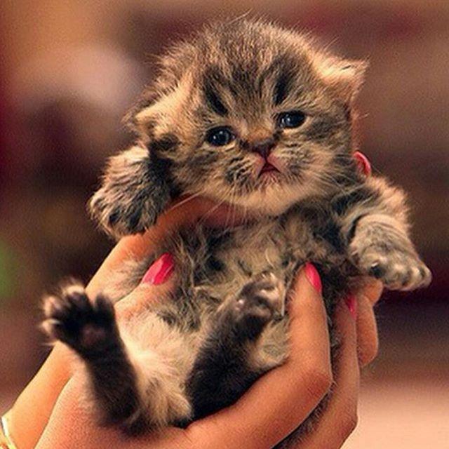 Картинки и анимации котики на руках