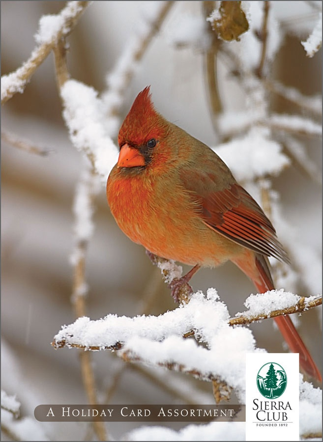 17 Best Wv Snow Birds Images On Pinterest Beautiful