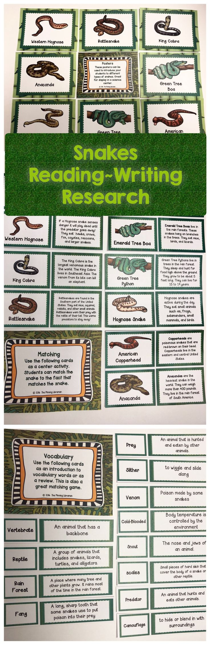 Snakes-Reading Writing and Research packet contains so many activities and is a great way to get your students excited about snakes! Includes: reading passages, posters, vocabulary matching, types of snakes matching, a powerpoint presentation about snakes, and more!