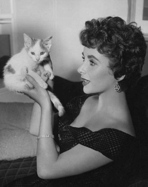 Elizabeth Taylor with kitten, 1950s