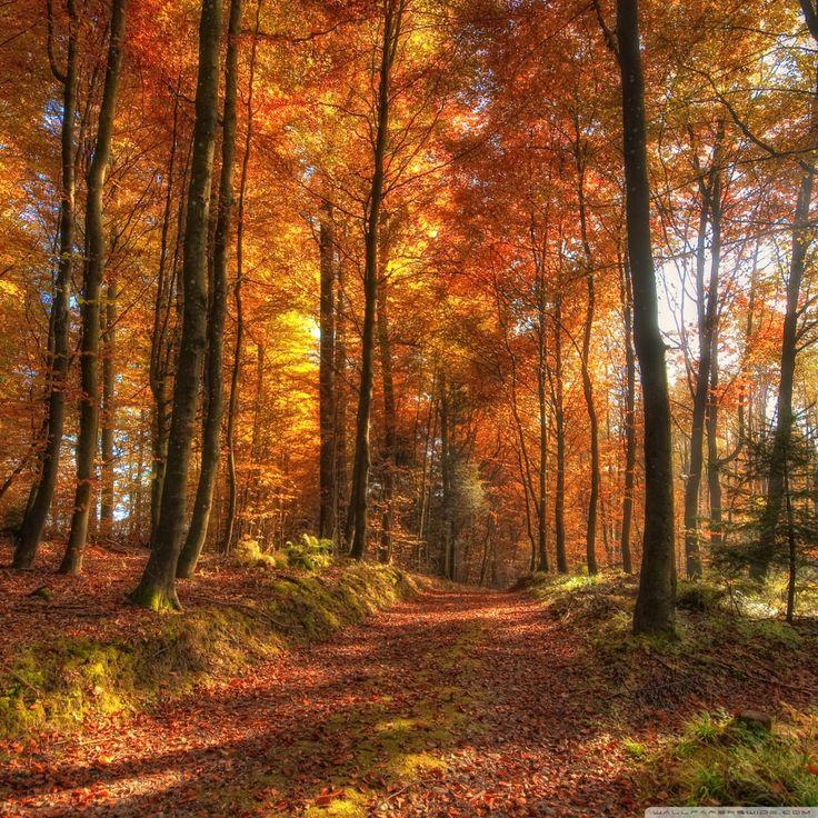 Fall Pics Wallpaper: Best 25+ Autumn Desktop Wallpaper Ideas On Pinterest