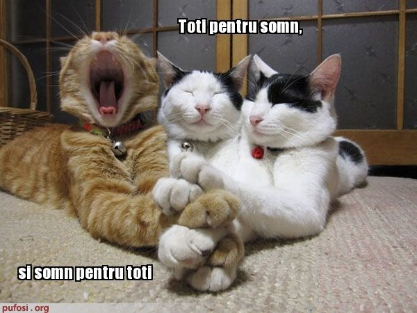poze-amuzante-somn-pisicesc.jpg (600×450)