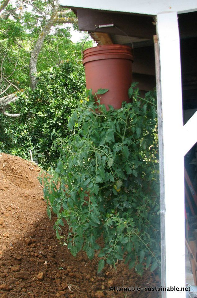 Upside Down Tomatoes Planters Gardens And Container Gardening