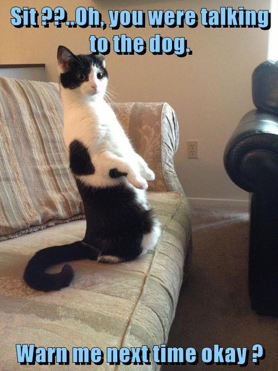 Sit ?? http://cheezburger.com/9048792064