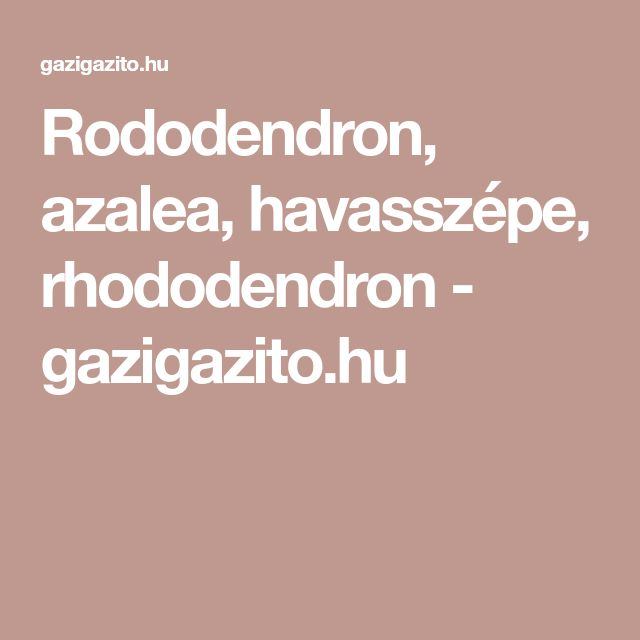 Rododendron, azalea, havasszépe, rhododendron - gazigazito.hu