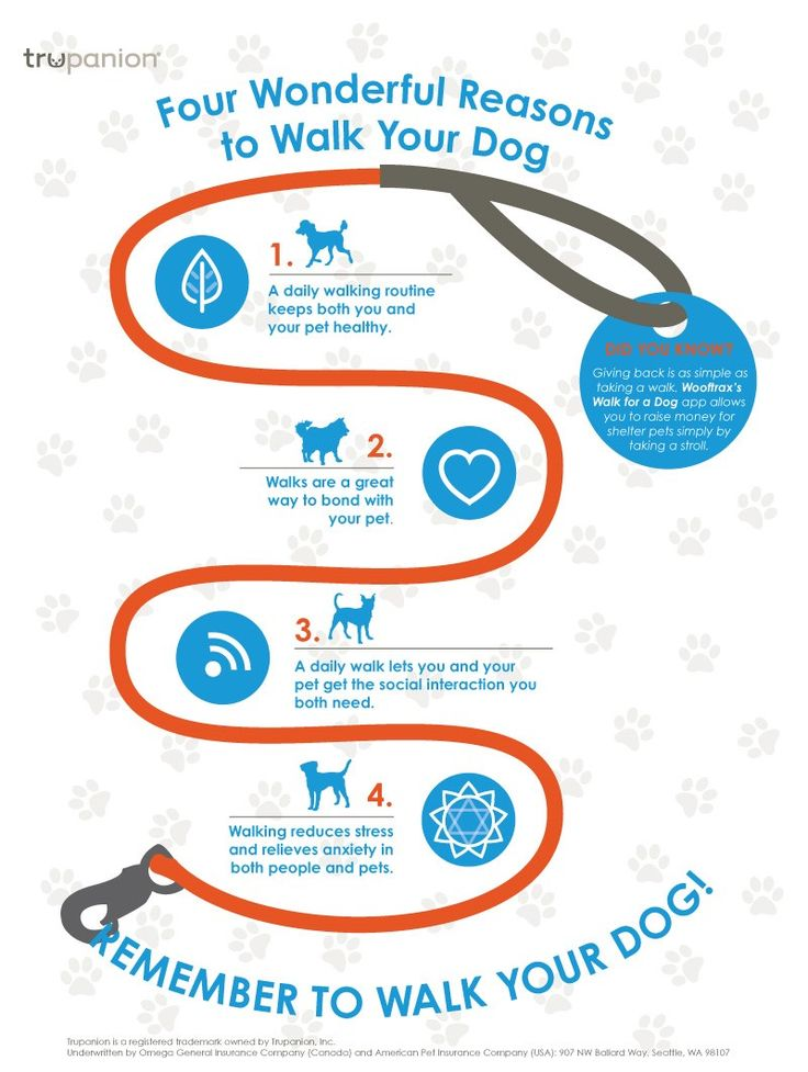 Walking your dog is not only healthy, but it strengthens the bond between owners and their pets. Here's a few reasons to walk with your pet