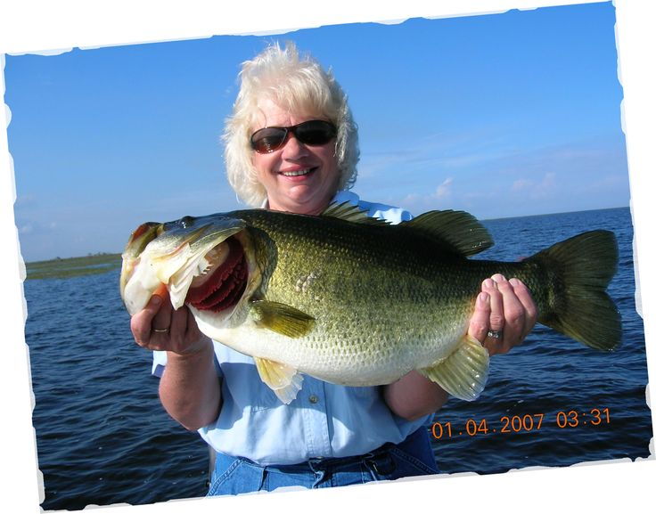 24 best images about fish species in healthy florida lakes for Best bass fishing lakes