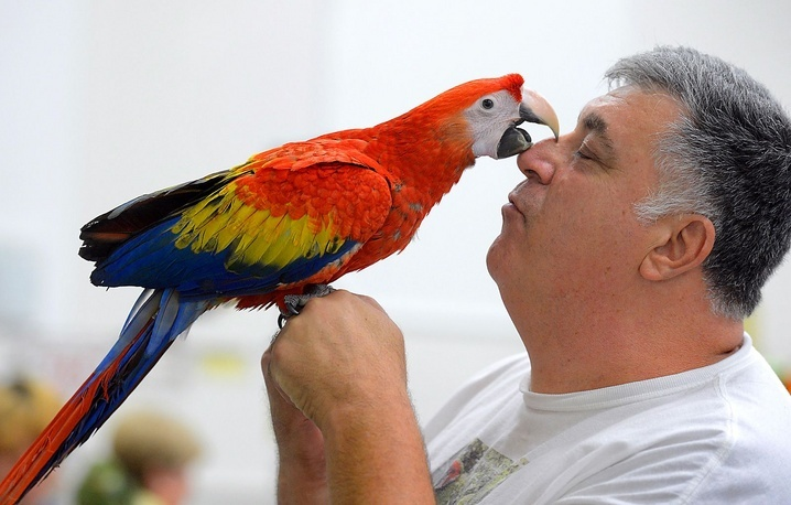Suncoast Exotic Bird Show in Sarasota, Fla.