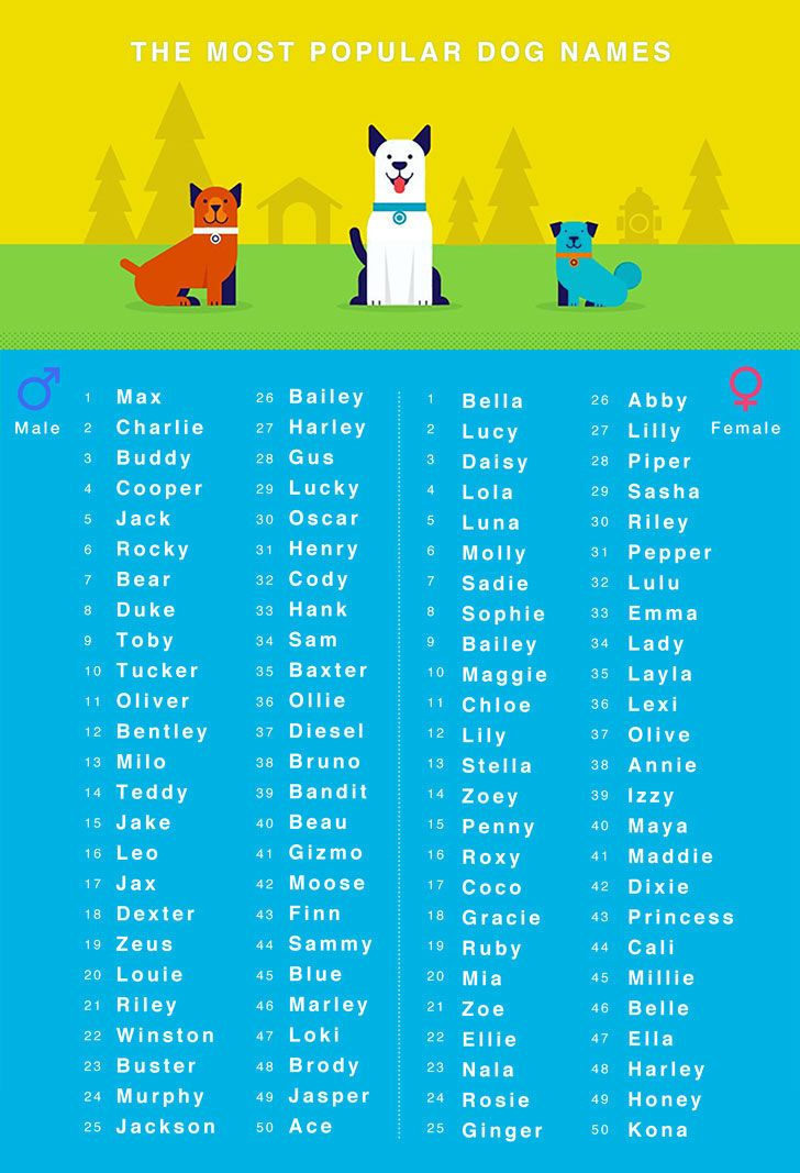 80 Unique Dog Names That Makes Picking Your Dog S Name A Piece Of Cake Cute Names For Dogs Dog Names Funny Dog Names