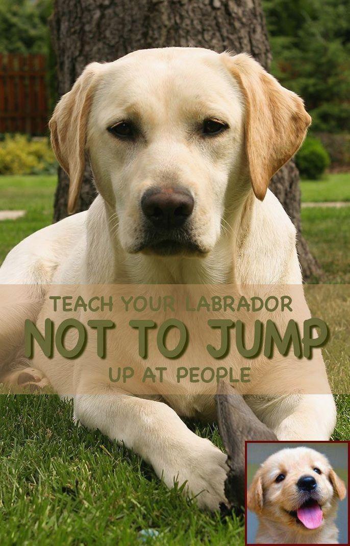 1 Have Dog Behavior Problems Learn About Dog Behavior Sitting On