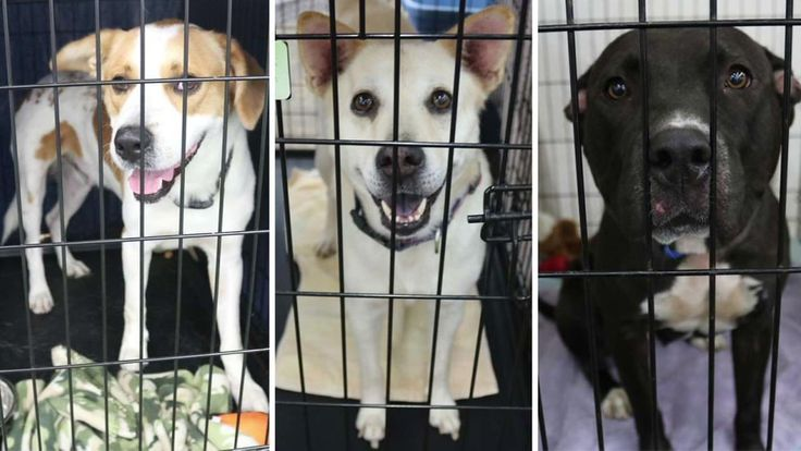 """""""If there's one thing I could tell people, it's to prepare. Buy a life jacket for your pet and have a way for them to get out too,"""" --  """"Houston Pets Alive"""" only became a physical shelter after they rescued hundreds of animals during Harvey, but they've been saving animals from euthanasia for years."""
