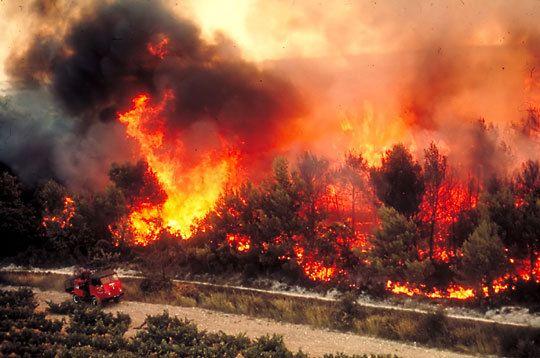 Incendie et feu de forêt