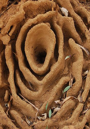 A beautiful sculpture ~ Harvester Ant Nest