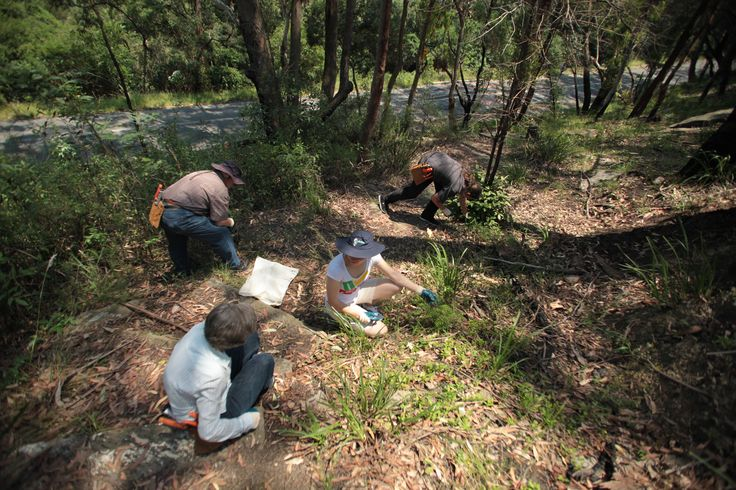 Pidding Park - Pidding Road, Ryde, NSW. Bushcare volunteers meet the 2nd Saturday of each month from 1.30pm - 3.30pm. All welcome. #Ryde #Park #Bushcare #Environment #Sustainability #Conservation #Bush #Bushland #Flora #Volunteer #CityofRyde #RydeLocal