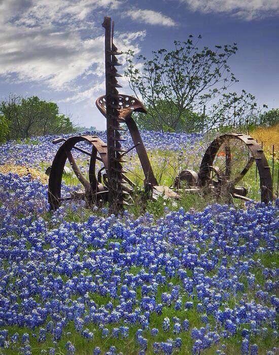 Beautiful Flowers w/Old Hay Cutter