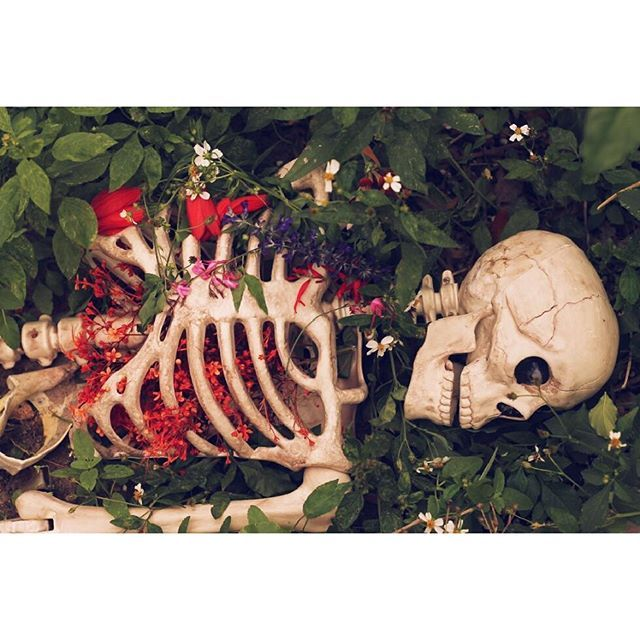 "🌺💀🌺 ""Death must be so beautiful. To lie in the soft brown earth, with the grasses waving above one's head, and listen to silence. To have no yesterday, and no to-morrow. To forget time, to forget life, to be at peace."" —Oscar Wilde, The Canterville Ghost  #garden #flowers #meditation #life #death #green  #permaculture #urbanpermaculture #halloween #halloweencostume  #gardendecor #gardening #skull #skeleton  #canon #photography #florida #startup #crowdfunding #growfood #growsoil…"