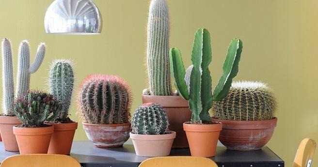 ¿Quieres saber cómo riego mis cactus? Entonces pincha aquí =)