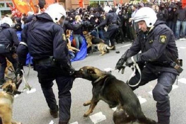 La police en folie