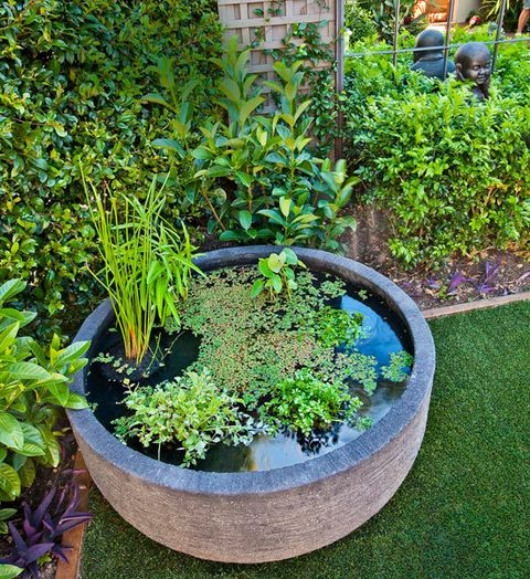 Top 500 Ideas About Green Thumb On Pinterest Gardens