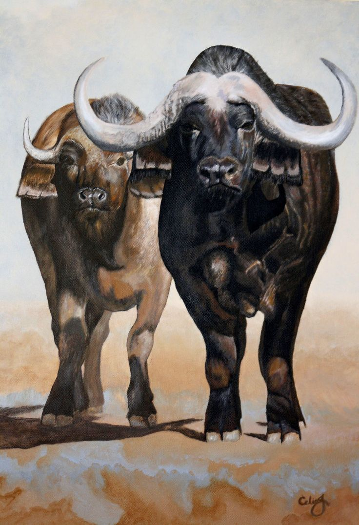Buffalo 2 (CeliaJ)