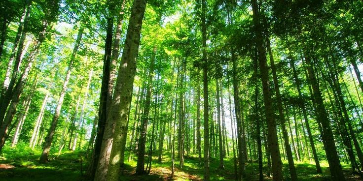 VF Corporation's new policy aims to minimize impact on endangered forests