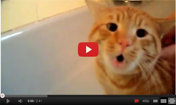 Oh ya! The Cat Says 'NO!' to Bath. I can't believe this !
