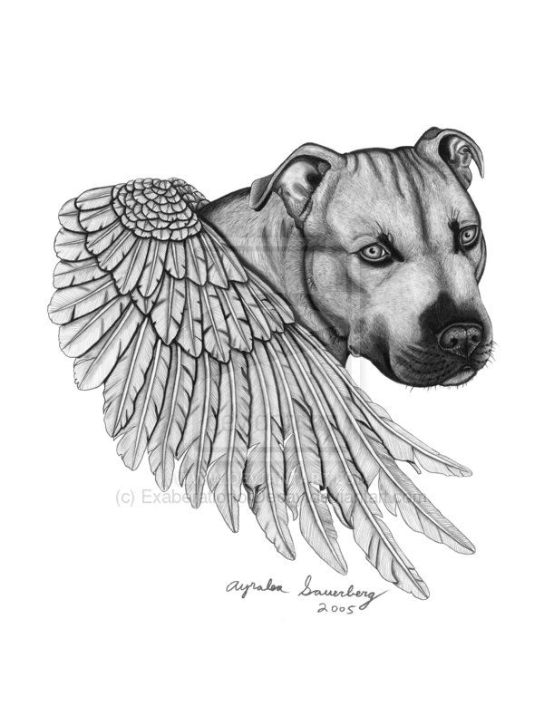 Pit Bull by ExaberationofDecay.deviantart.com on @deviantART
