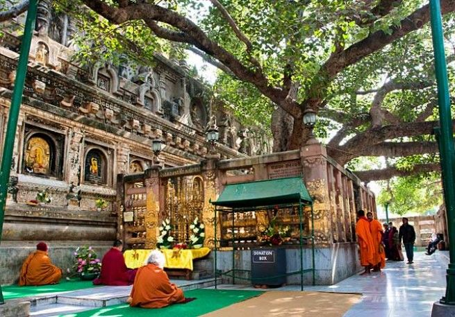 Monks at the Bodhi tree