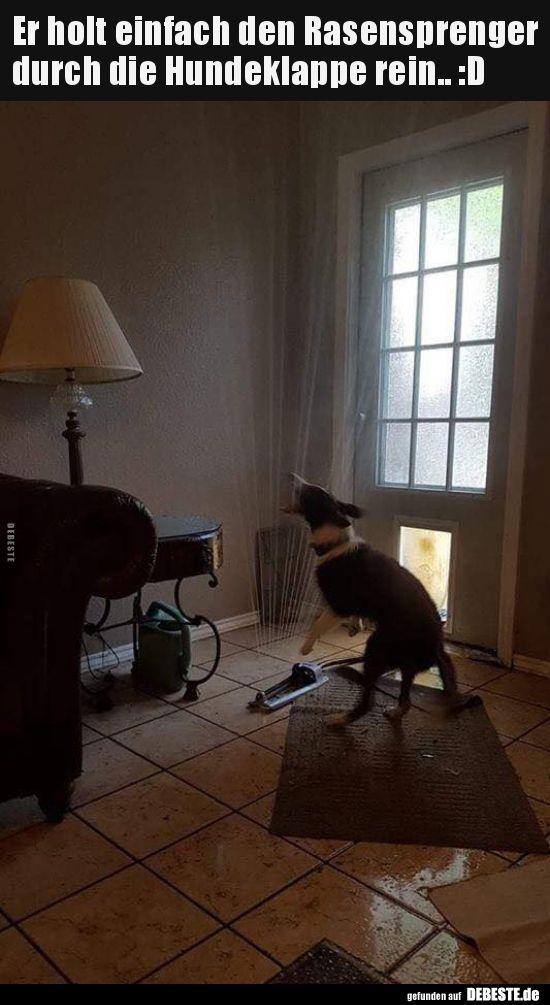 Ele está apenas trazendo o aspersor do gramado através dos cães   – Lustige Tiere Hund