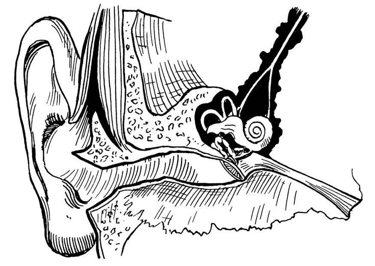 Coloring Page Ear Internal And External